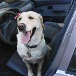 Tips to Ease Car Sickness