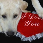 Why Your Lab Loves You