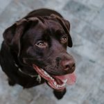"""AVMA: """"Doggie breath"""" could be a sign of serious disease"""